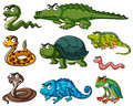 Different kinds of reptiles