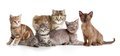 Different kitten or cats group Royalty Free Stock Photo