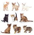 Different kittens collection isolate on white Royalty Free Stock Image