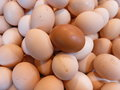 Different lots of white eggs with one brown egg there are Royalty Free Stock Photos