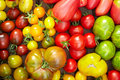 Different organic tomatoes Stock Photography