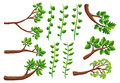 Different patterns of vine and branches