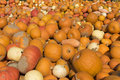 Different pumpkins for sale on farmers market Stock Images