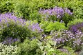 Different purple flowers in Regent Park in London Royalty Free Stock Photo