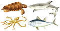 Different sea creatures on a white background Stock Photo