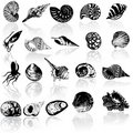 Different  sea  shells Royalty Free Stock Photos