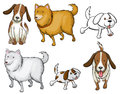 Different specie of dogs illustration the on a white background Stock Image