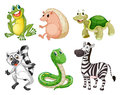 Different species of animals illustration the on a white background Royalty Free Stock Image