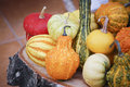 Different species of pumpkins Royalty Free Stock Photo