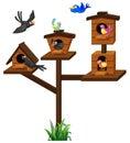 Different types of birds in birdcage