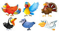 Different types of birds illustration the on a white background Stock Images
