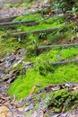 Green moss covering stairs at natural hiking trekking trail at K Royalty Free Stock Photo