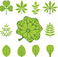 Different types of leaves Stock Photos
