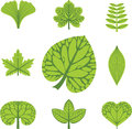Different  types of leaves Royalty Free Stock Images