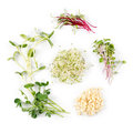 Different Types Of Micro Green...