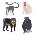 Different types of monkeys rare animal vector set.