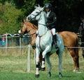 Powerful Wild eyed horse. Rider.