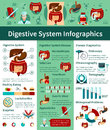 Digestive System Flat Infographics