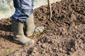 Digging on the allotment gardener over soil an Stock Images
