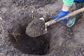Digging the hole for planting bush in garden Royalty Free Stock Photo