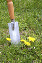 Digging out Dandelions Stock Photography