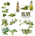 Digital color  detailed line art fresh green olives