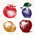 Digital vector detailed color fruit hand drawn