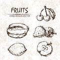 Digital vector detailed fruit hand drawn