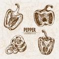 Digital vector detailed line art pepper vegetable