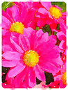 Digital watercolour of pink daisy pollen flowers Royalty Free Stock Photo