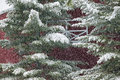 Digitally manipulated image of a snow covered pine tree in front red barn stowe vermont usa Royalty Free Stock Photography