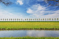 Dike with a row of trees in the Beemster Polder Royalty Free Stock Photo