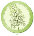 Dill Herb  Royalty Free Stock Photo