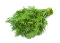 Dill herb closeup isolated on white background Royalty Free Stock Images