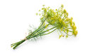 Dill isolated on white bunch of fresh with flower Stock Photos