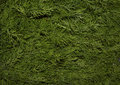 Dill park evergreen color lush branch spring fresh backgrounds growth tree pattern turf meadow abstract leaf natural grass green n