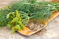 Dill and seeds on a wooden spoon Royalty Free Stock Photo