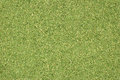 Dill tops or grass clippings background abstract texture Stock Photography