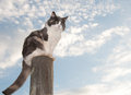 Diluted calico cat sitting on a fence Stock Photography