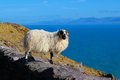 Dingle ireland clouds tour guide view irish mountain ocean atlantic sheep scenery Royalty Free Stock Photography