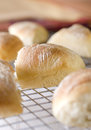 Dinner rolls closeup of fresh on a cooling rack Royalty Free Stock Images