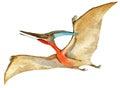 Dinosaur Animal Illustration.