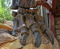 Dinosaur bones Royalty Free Stock Photo