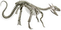Dinosaur Bones Skeleton Illustration Isolated Royalty Free Stock Photo
