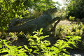 Dinosaur Crystal Palace Park Royalty Free Stock Photo