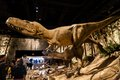 Dinosaur Exhibits at Royal Tyrrell Museum in Drumheller, Canada Royalty Free Stock Photo