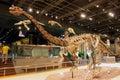 Dinosaur Fossil Skeleton Royalty Free Stock Image