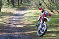 Dirt bike in forest Stock Image