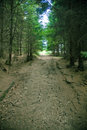 Dirt path Stock Photography