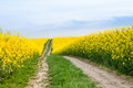 Dirt path through farmland Royalty Free Stock Photo